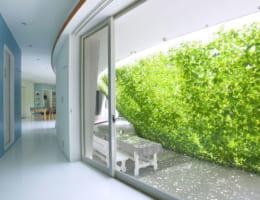 Mảng tường xanh sống trong lành